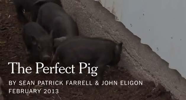Den perfekta grisen